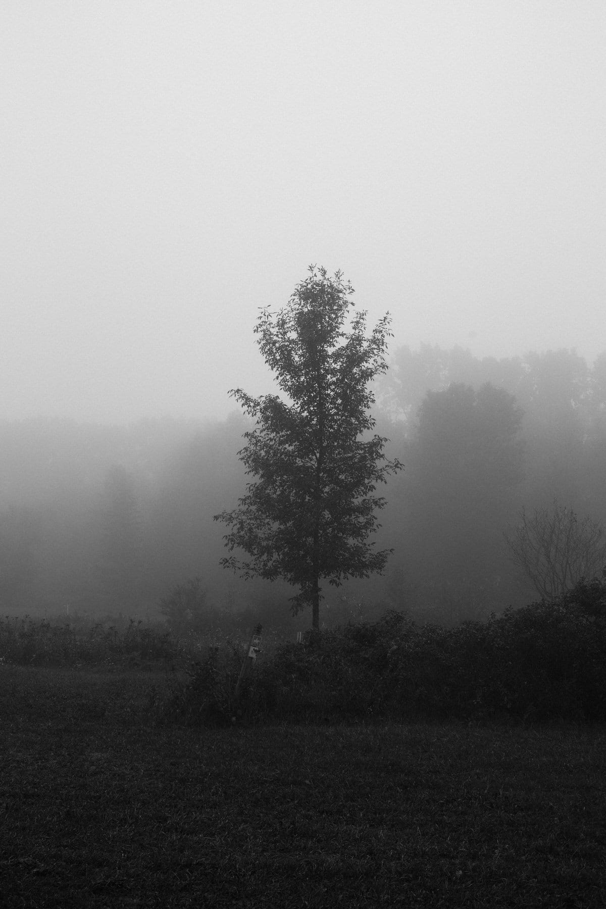 Kiekhaefer-Park-Fond-du-Lac-Wisconsin-black-and-white-fine-art-photography-by-Studio-L-photographer-Laura-Schneider-_3391