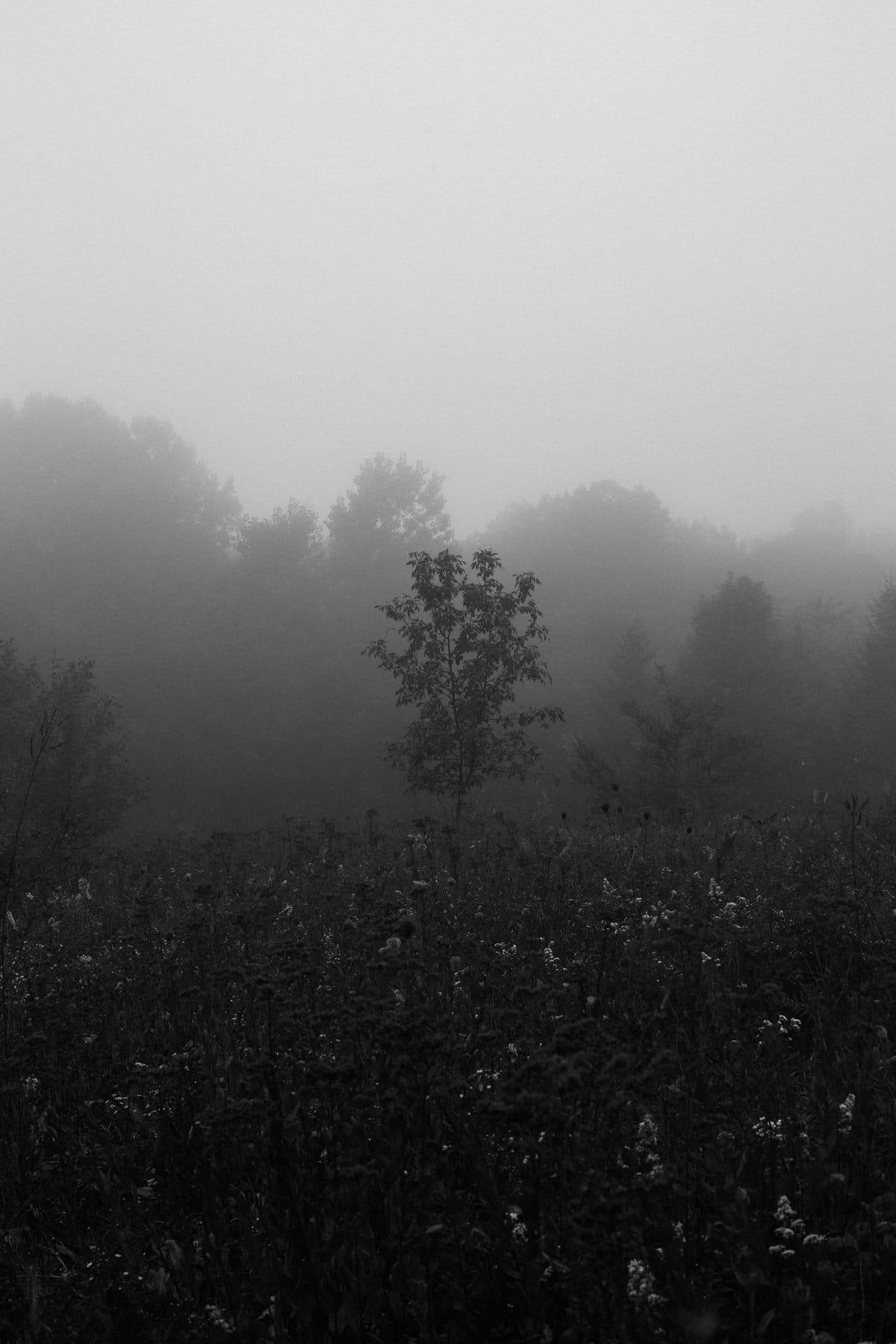 Kiekhaefer-Park-Fond-du-Lac-Wisconsin-black-and-white-fine-art-photography-by-Studio-L-photographer-Laura-Schneider-_3395