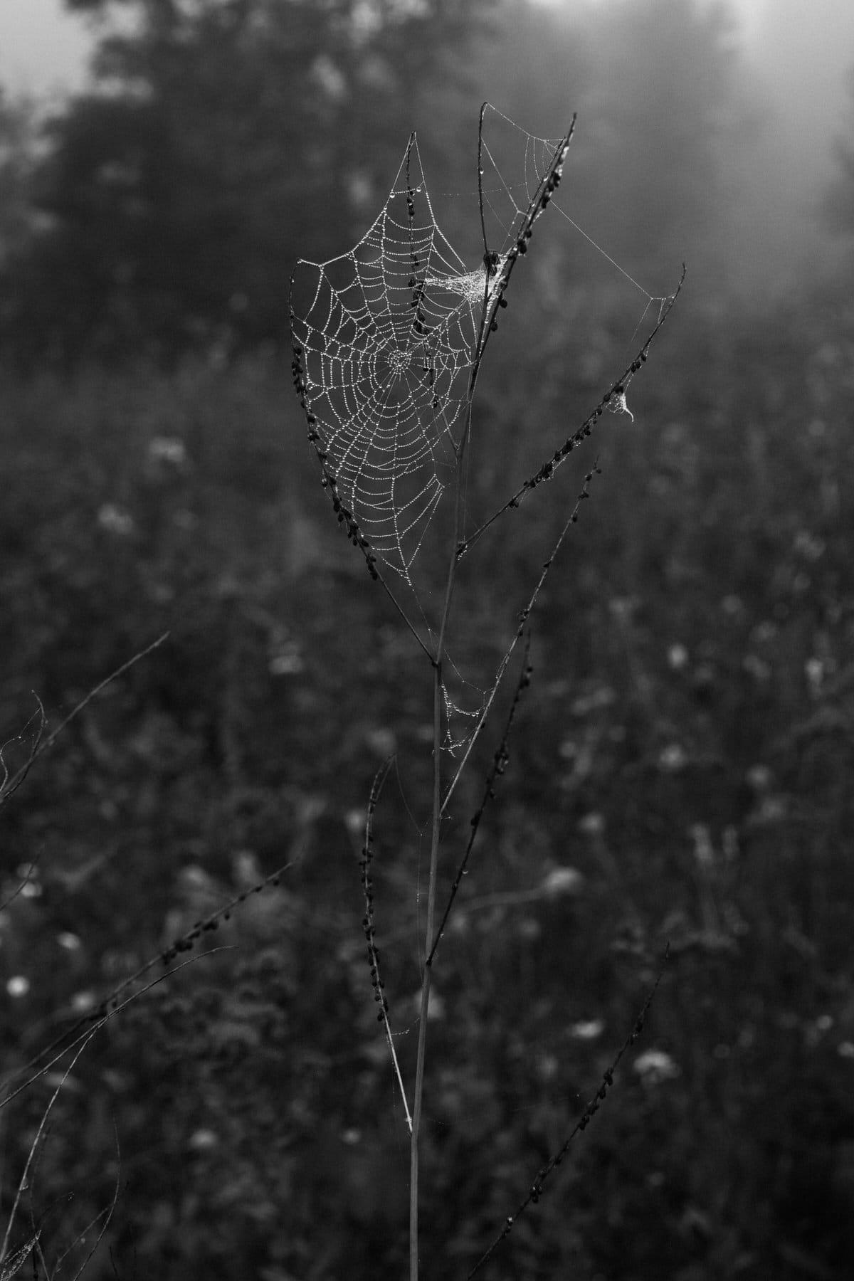 Kiekhaefer-Park-Fond-du-Lac-Wisconsin-black-and-white-fine-art-photography-by-Studio-L-photographer-Laura-Schneider-_3398