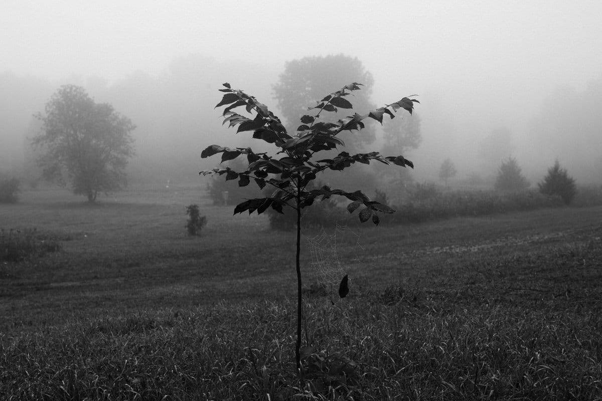 Kiekhaefer-Park-Fond-du-Lac-Wisconsin-black-and-white-fine-art-photography-by-Studio-L-photographer-Laura-Schneider-_3425