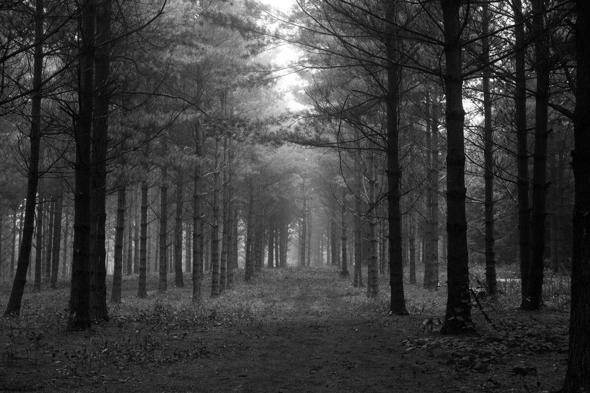 Kiekhaefer-Park-Fond-du-Lac-Wisconsin-black-and-white-fine-art-photography-by-Studio-L-photographer-Laura-Schneider-_3429
