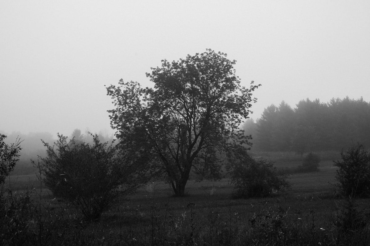 Kiekhaefer-Park-Fond-du-Lac-Wisconsin-black-and-white-fine-art-photography-by-Studio-L-photographer-Laura-Schneider-_3467