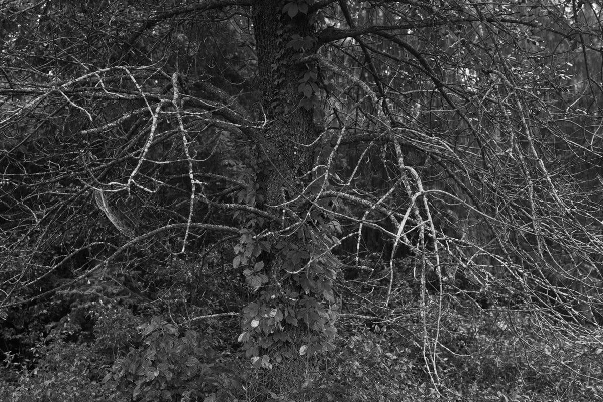 Kiekhaefer-Park-Fond-du-Lac-Wisconsin-black-and-white-fine-art-photography-by-Studio-L-photographer-Laura-Schneider-_3475