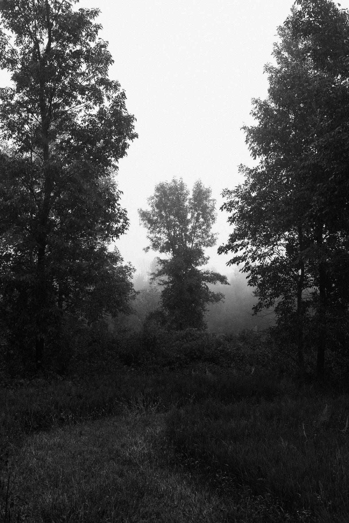 Kiekhaefer-Park-Fond-du-Lac-Wisconsin-black-and-white-fine-art-photography-by-Studio-L-photographer-Laura-Schneider-_3491