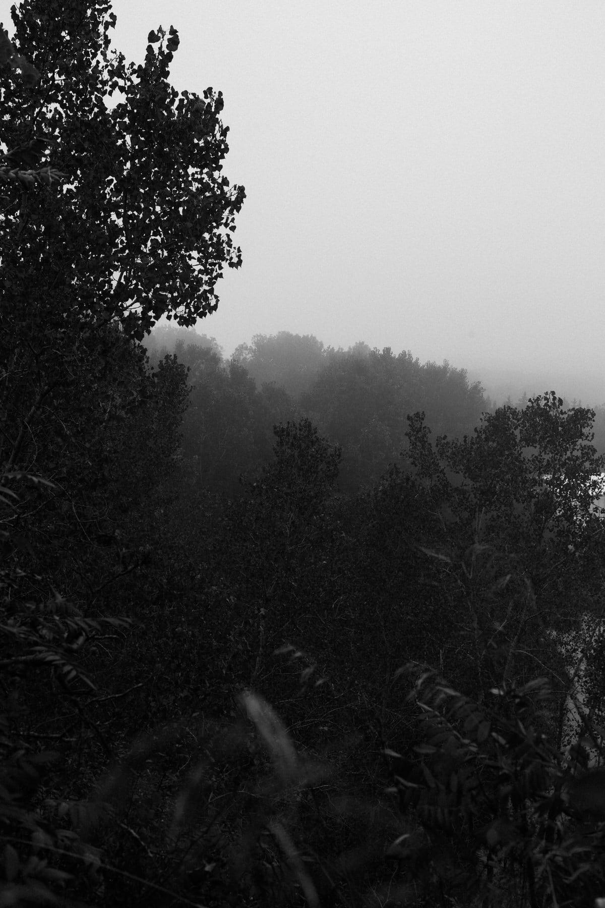 Kiekhaefer-Park-Fond-du-Lac-Wisconsin-black-and-white-fine-art-photography-by-Studio-L-photographer-Laura-Schneider-_3499