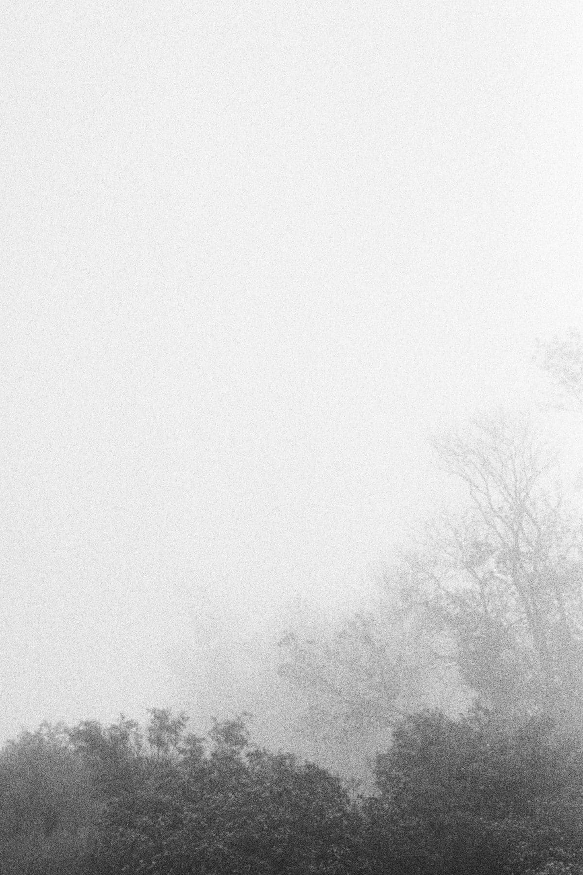 Into-the-fog-black-and-white-fine-art-film-photography-by-Studio-L-photographer-Laura-Schneider-_002