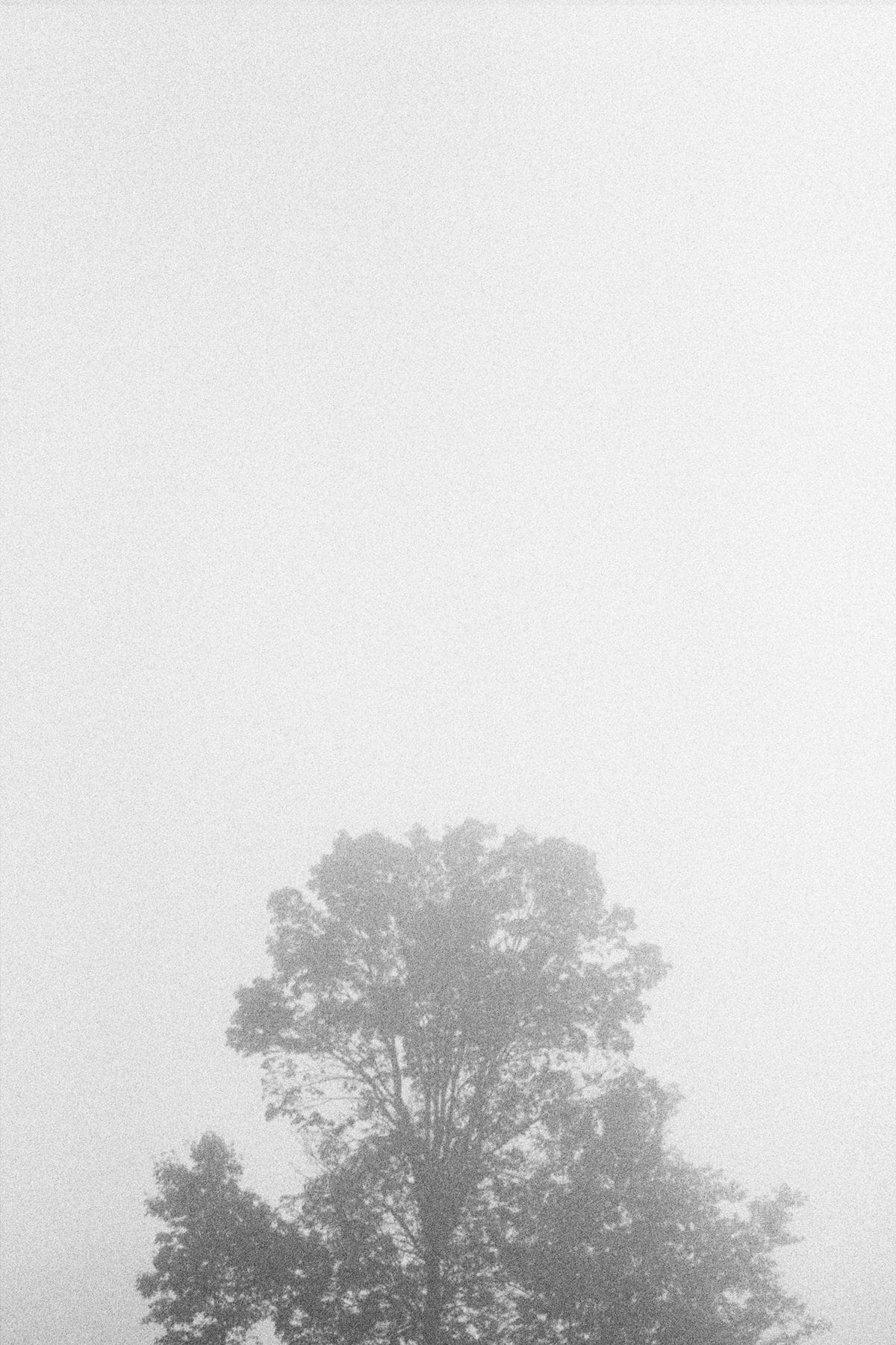 Solo-tree-black-and-white-fine-art-film-photography-by-Studio-L-photographer-Laura-Schneider-_001