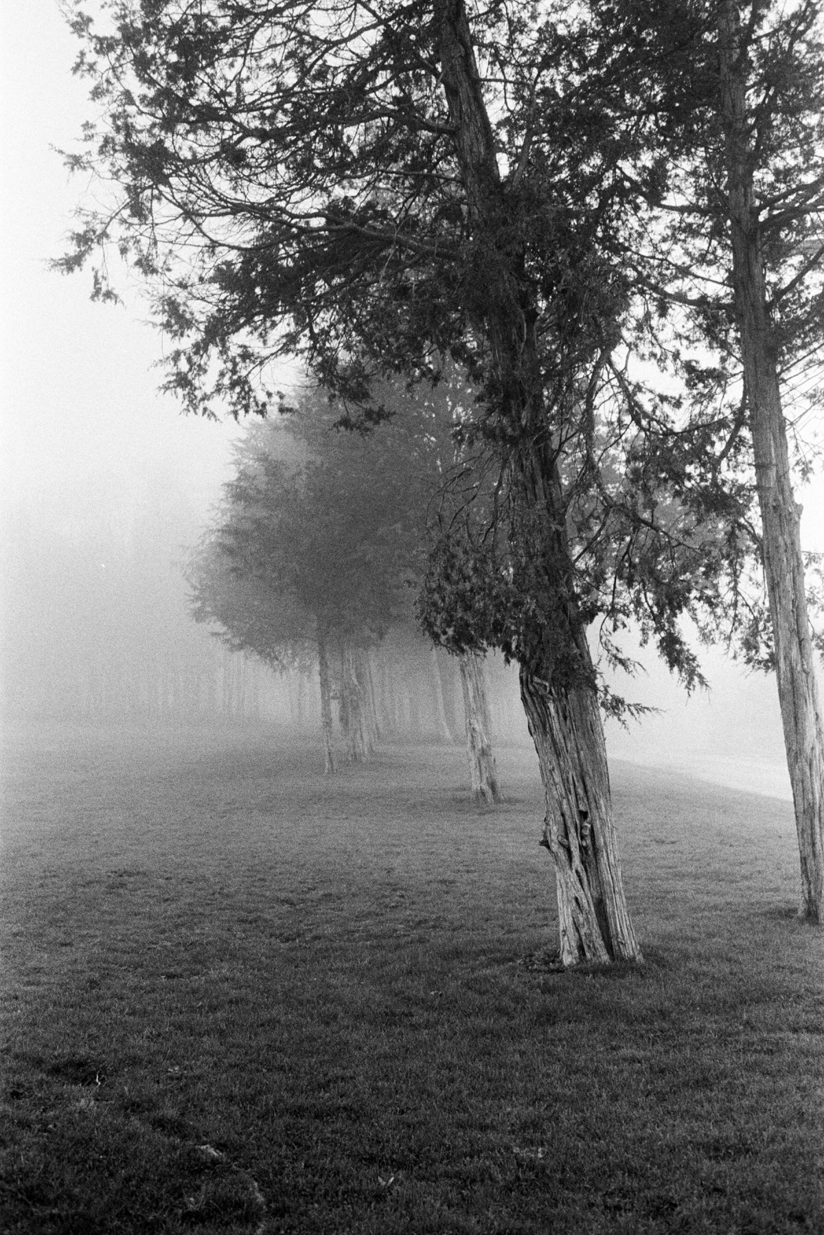 Midwest-Fog-black-and-white-fine-art-film-photography-by-Studio-L-photographer-Laura-Schneider-_022