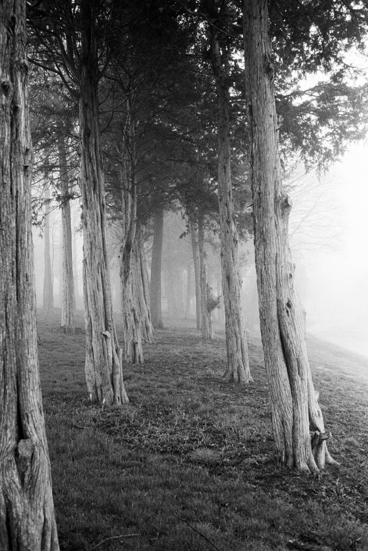 Midwest-Fog-black-and-white-fine-art-film-photography-by-Studio-L-photographer-Laura-Schneider-_024