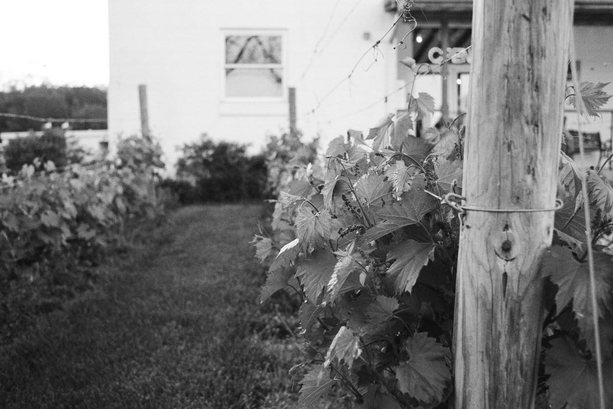 Lake-Geneva-Wisconsin-black-and-white-fine-art-film-photography-by-Studio-L-photographer-Laura-Schneider-_021A