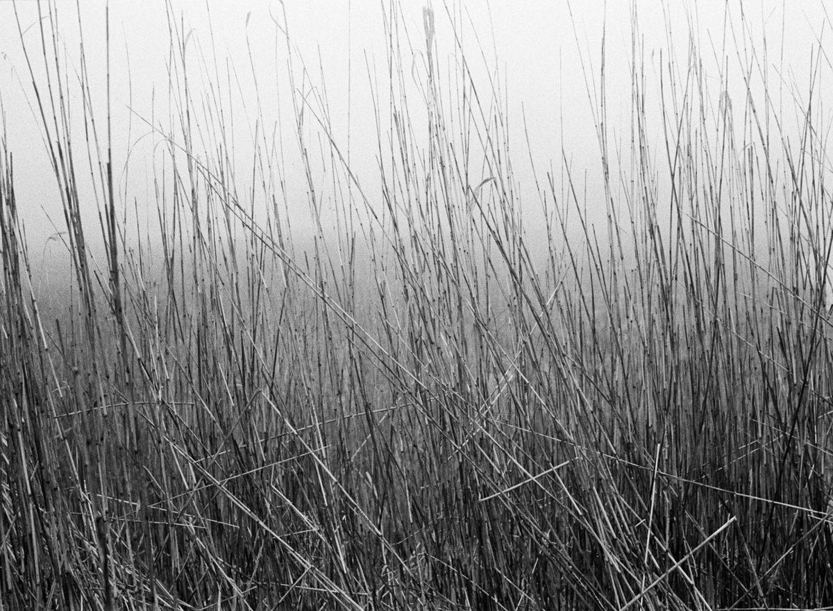 Black-and-white-fine-art-film-photography-wall-decor-by-emerging-artist-Studio-L-photographer-Laura-Schneider-_011