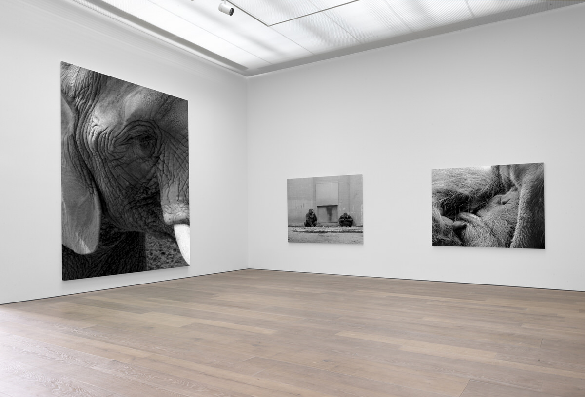 black-and-white-fine-art-photography-san-diego-zoo-gallery-exhibition-by-Studio-L-photographer-Laura-Schneider-_055