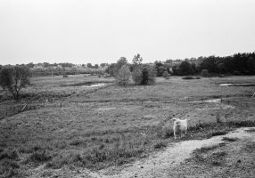 Cristo-Rey-Ranch-Wisconsin-black-and-white-fine-art-photography-by-Studio-L-photographer-Laura-Schneider-_0027